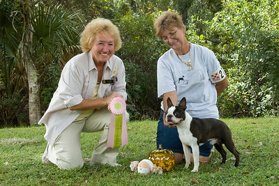 """RV,"" a Boston Terrier took the Non-Sporting Group and went onto win Best In Match Senior Puppy."