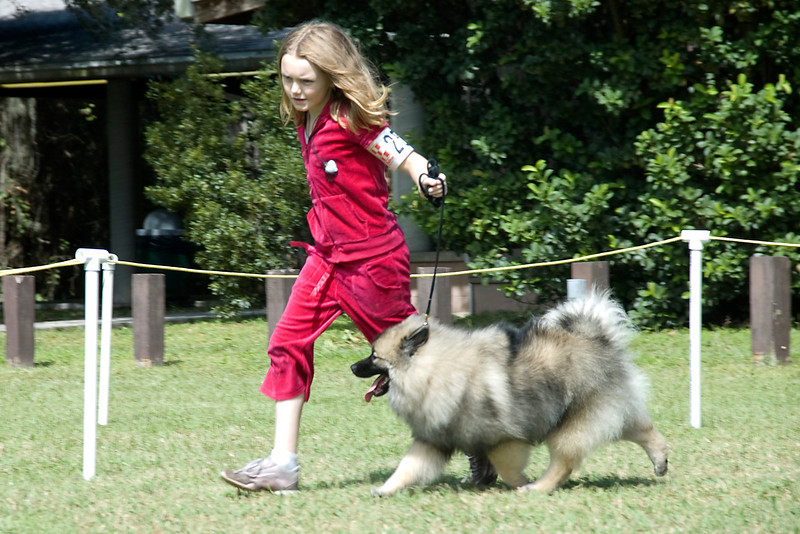 This young lady and her Keeshond compete during the Junior Showmanship competition.
