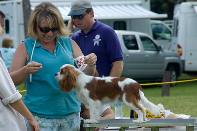 This Cavalier King Charles Spaniel won its Breed, Toy Group and went onto compete for Best In Match Senior Puppy.