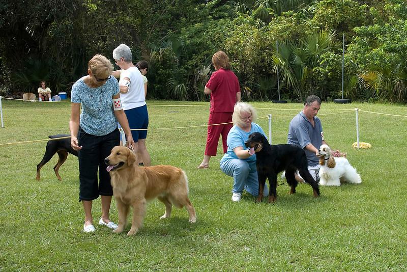 Sporting Group Senior Puppy line-up - Golden Retriever, Gordon Setter and Cocker Spaniel