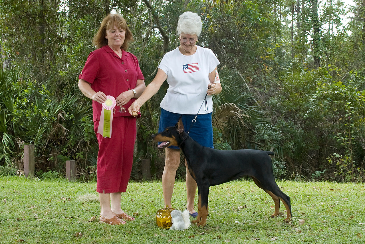 """""""Paris,"""" a Doberman Pincher won the Working Group and went onto win Best In Match Junior Puppy."""