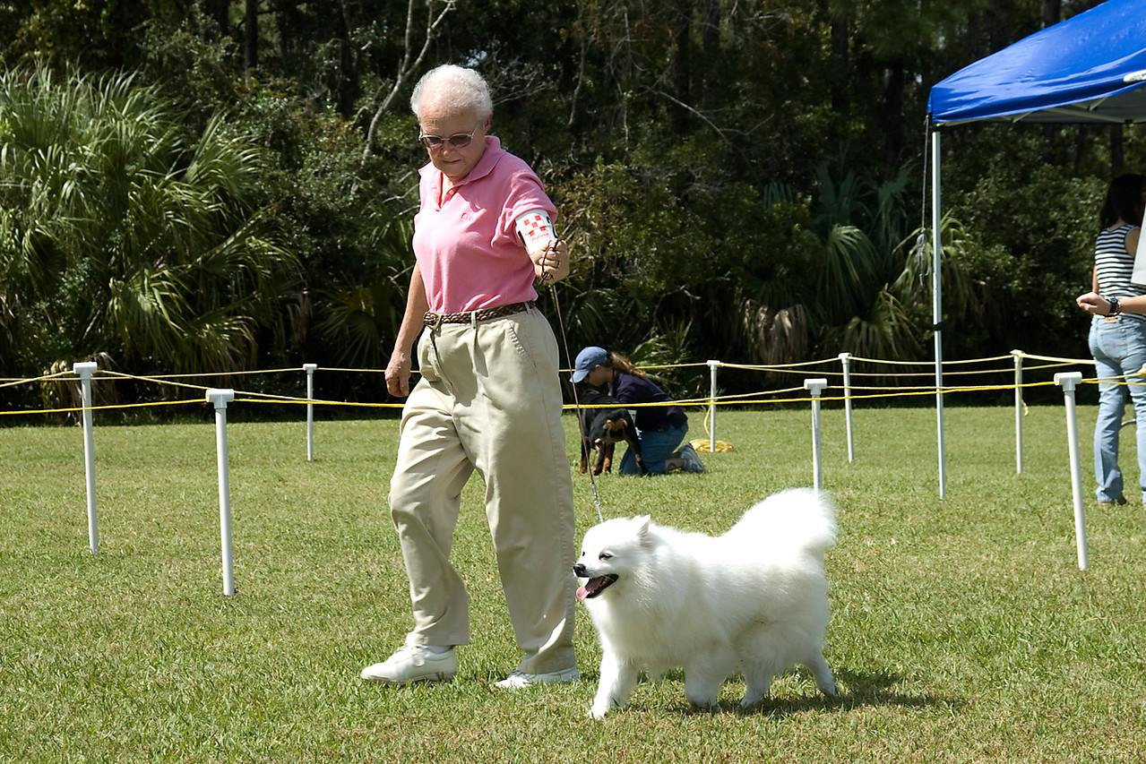 The American Eskimo Dog competes in the Non-Sporting group.