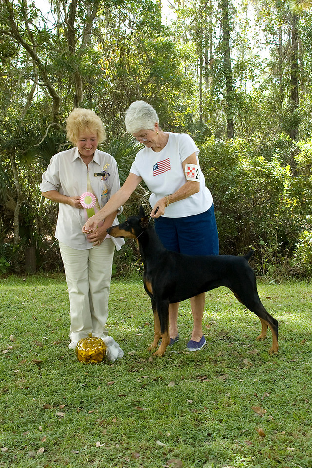 """""""Tara,"""" a Doberman Pincher won the Working Group and went onto win Best In Match Adult."""