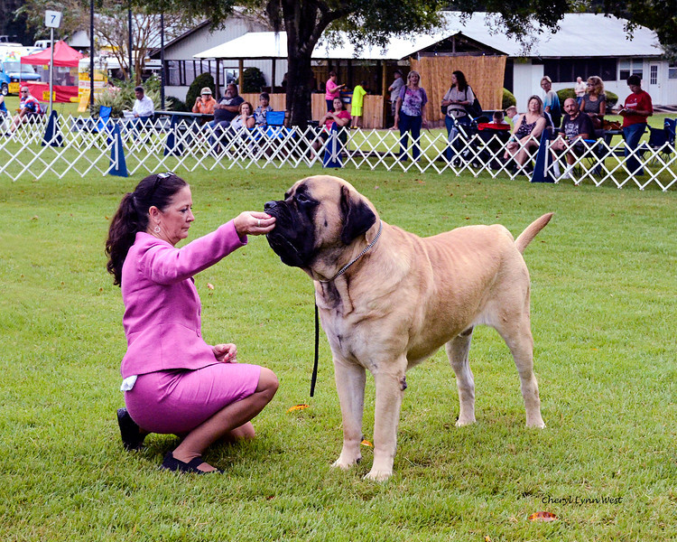 GCH Goldleaf's Trouble Coming CGC, Owner - Laura Watson, (Terry Smith - Agent)