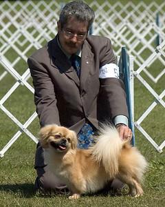 CH Ridina's Strike Force, owner Diane Nachman, agent Gary Sheetz - Best of Breed, Tibetian Spaniel, Saturday, March 22nd & Sunday, March 23rd http://www.sheetzhandling.com - Seminole Dog Fanciers Association, March 22nd & 23rd, 2008