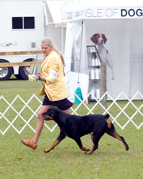 Winchester's Mercedez Von Sager, Rottweiler, with Connie Sager, agent.  Owners Robert & Catherine Pirtle & C Sager & A McClure. - Seminole Dog Fanciers Association, March 22nd & 23rd, 2008
