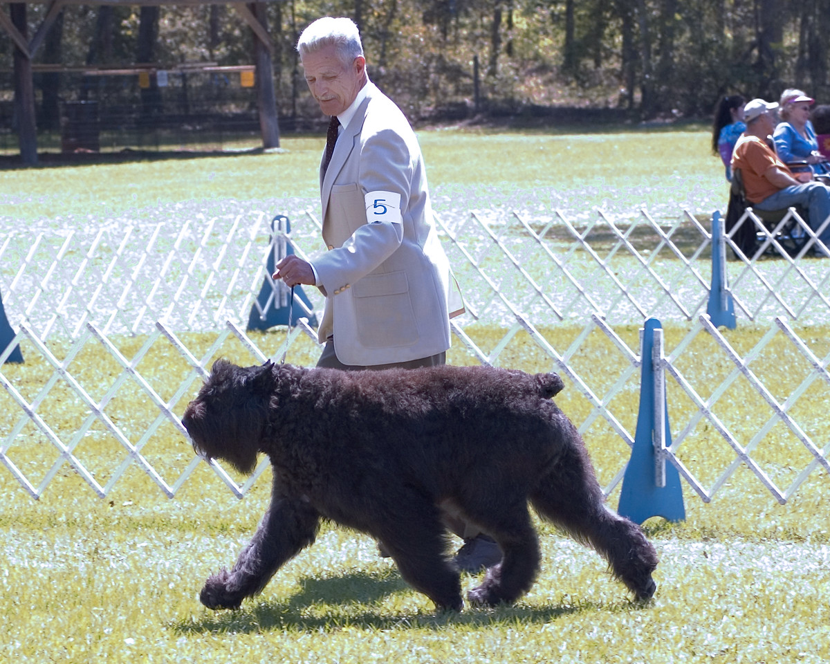 CH G & W Gresa Mazel, a Bouvier Des Flandres, owned by Elizabeth Sutter-Lupe & June Guido and handled by Jeff Brucker, agent, took Best of Breed and Group 2, Sunday, March 23rd - Seminole Dog Fanciers Association, March 22nd & 23rd, 2008