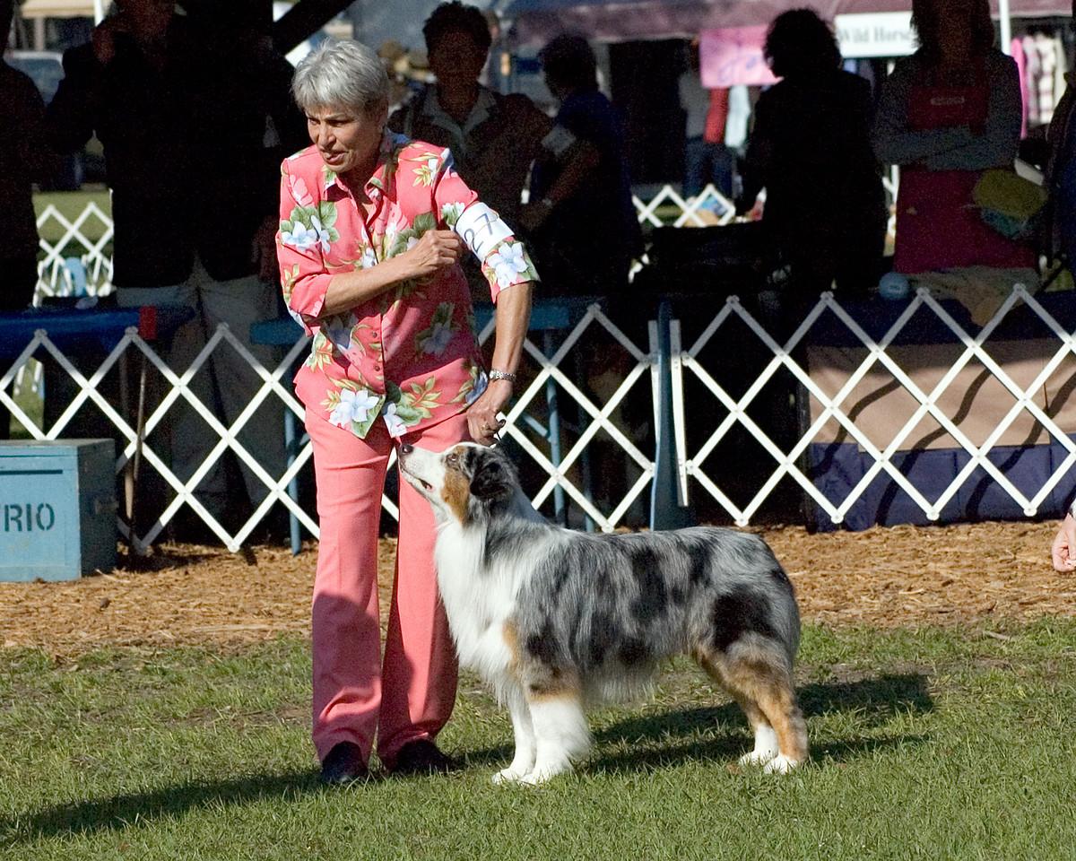 CH Mi-T Sunbears Noble Saint, Australian Shepherd, handled by Pat Stout, agent - Seminole Dog Fanciers Association, March 22nd & 23rd, 2008