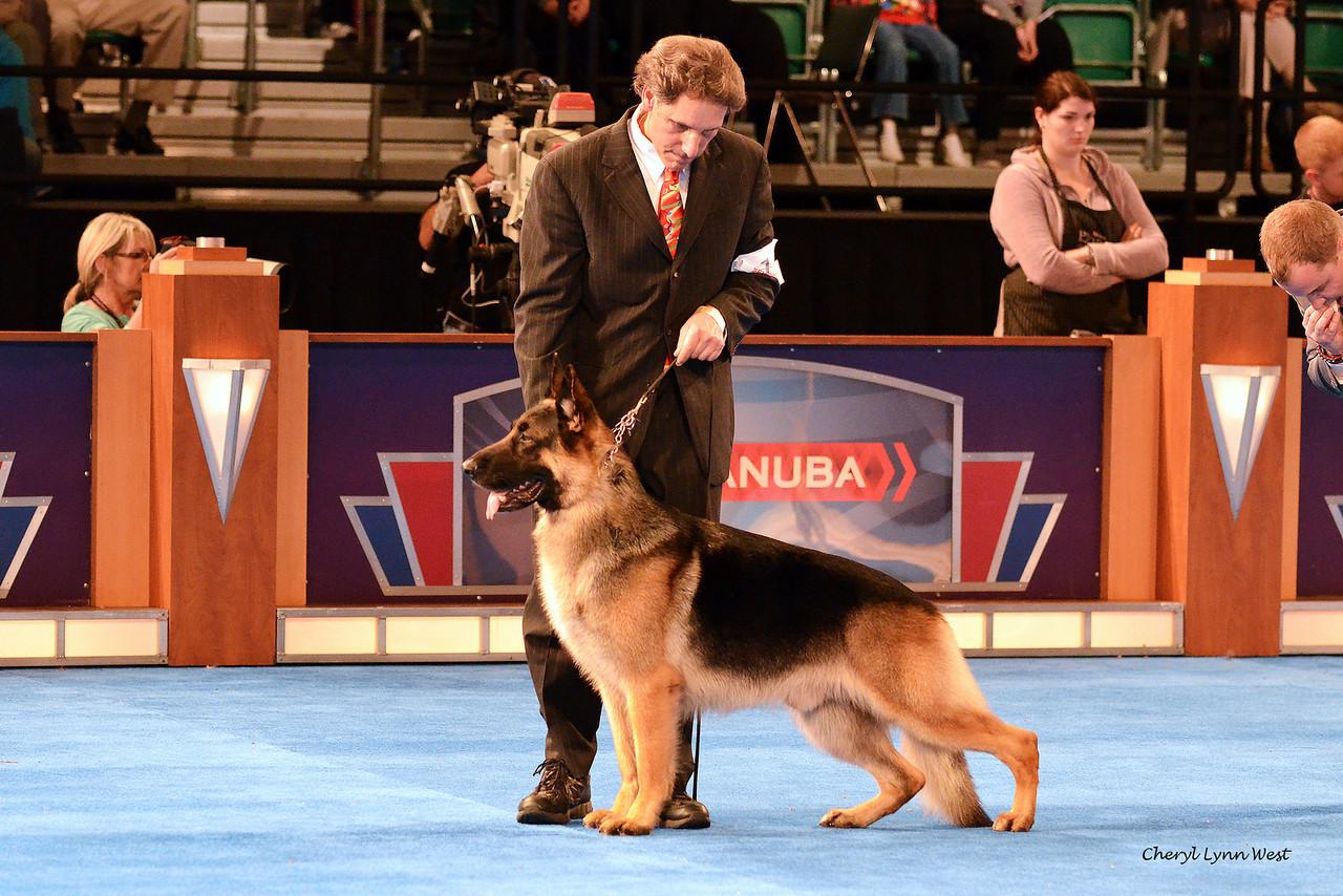 Best in Show competition - Herding Group 1 - German Shepherd Dog - GCH CH Wolf Creek Galaxy Of Merivern