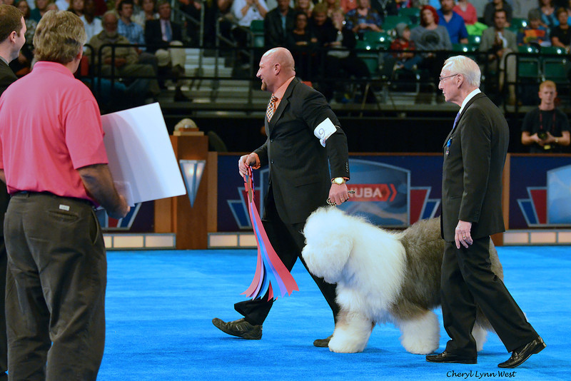 Bred-By Exhibitor Best in Show competition - Winner and Herding Group 1 - Old English Sheepdog - GCH CH Bugaboo's Picture Perfect