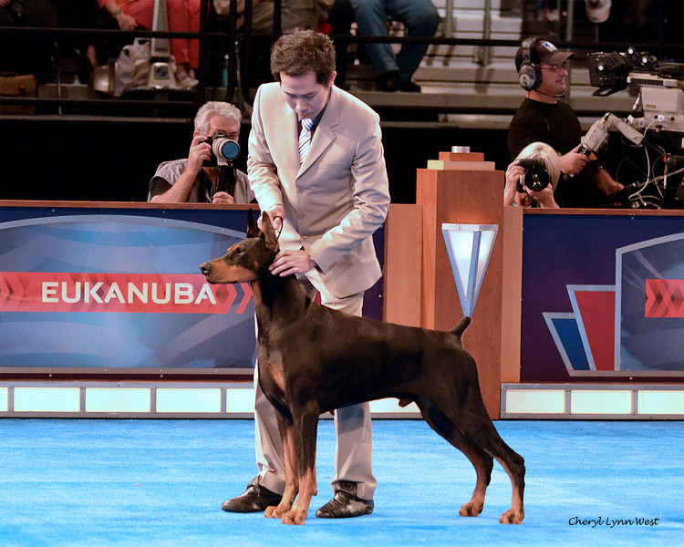 World Challenge - Malaysia -  Doberman Pinscher - Halley de Black Shadow - Bred By Eisa Beatriz Campisciano & JC Marchese