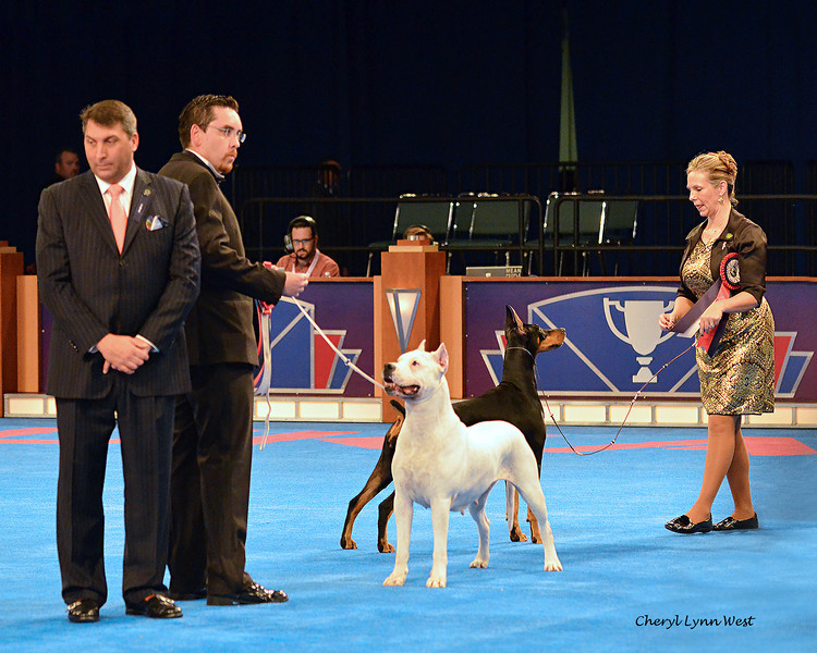 World Challenge - Runner-Up - Argentina - Dogo Argentino<br /> C.E.G.L.I.A. Monika de Don Eloy - Bred By Lilian Beatriz Colantonio & First Runner-Up - United States of America - Doberman Pinscher - GCH CH Protocol's Veni Vidi Vici - Bred By Jocelyn Mullins/Kevin Mullins