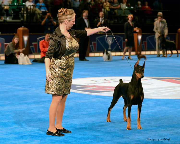 World Challenge - First Runner-Up - United States of America -  Doberman Pinscher - GCH CH Protocol's Veni Vidi Vici - Bred By Jocelyn Mullins/Kevin Mullins