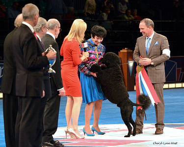 "Best in Show winner, ""thanking the judge"" - Portuguese Water Dog - GCH CH Claircreek Impression De Matisse"
