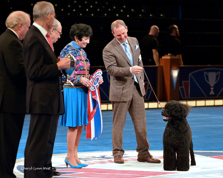 Best in Show winner, posing for the crwod - Portuguese Water Dog - GCH CH Claircreek Impression De Matisse