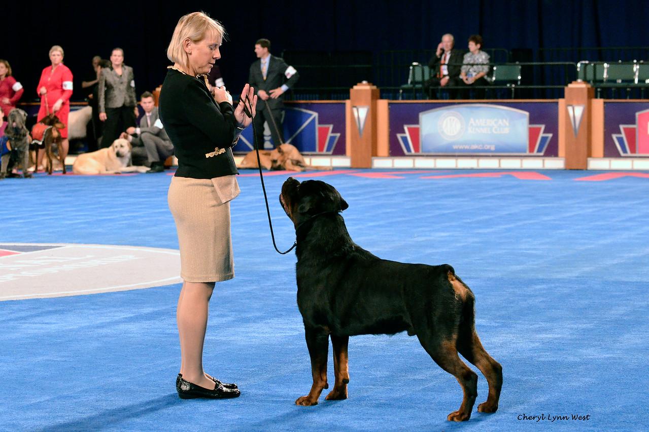 Rottweiler - GCH CH Big Beach's Rhumba Man<br /> Best of Breed