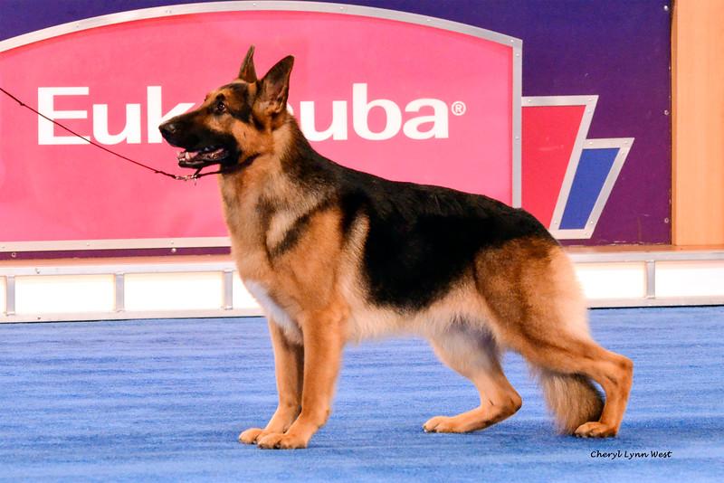 Best In Show GCH CH Lockenhaus' Rumor Has It V Kenlyn <br /> German Shepherd Dog - Also, Group 1 Herding