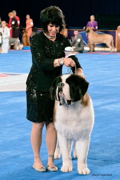 Saint Bernard - GCH CH Aksala's Peyton CGCA<br /> Best of Breed
