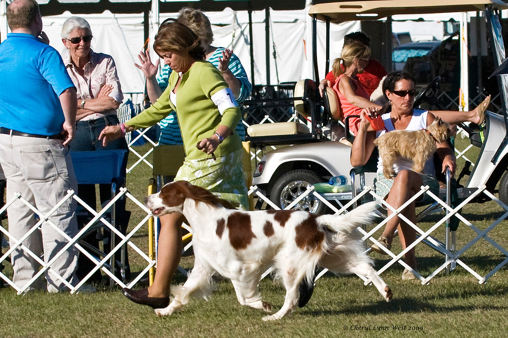 Shireoak Caniscaeli Windsong, a Irish Red & White Setter, took Best of Breed and Group 1 for a 5 point major.  He is owned by Dale & Leslie Harrison & Douglas Johnson and handled in the Sporting Group ring by Jane Alston-Myers, DHG.