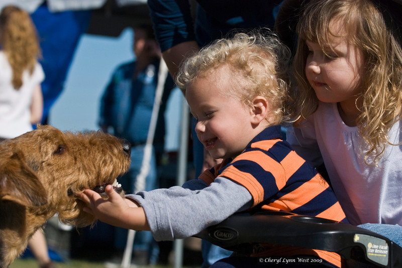 Two young children, Luke & Emily, are enjoying their first dog show.  It looks like Luke is a future judge in the making, as he checks out Ruby, an Airedale female.
