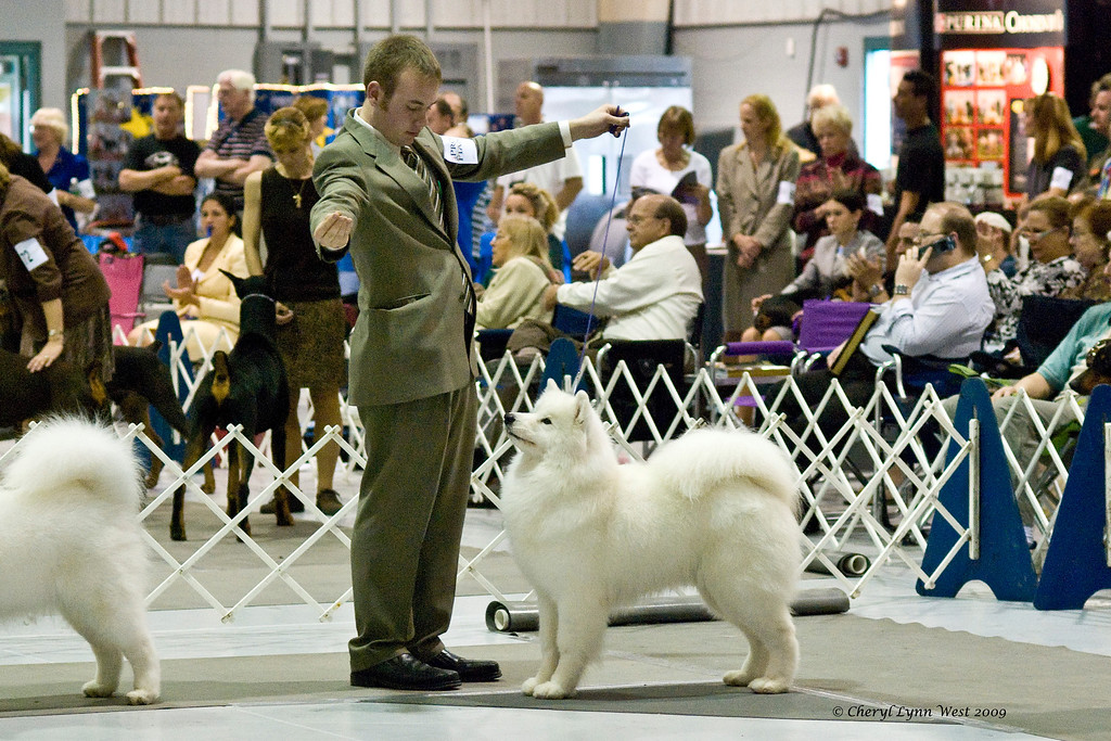 CH Polar Mist Great White's Secret Weapon, a Samoyed bitch, is owned by Ryan & Michelle Dillman.