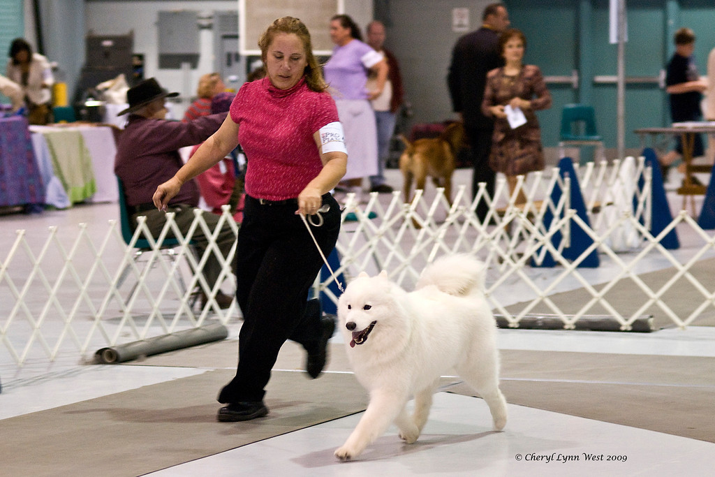 Windyridge Mystical Moment, a Samoyed, took Winners Bitch for a point on January 4th.  She is owned by George Brostoff, Connie Brown & John Studebaker.