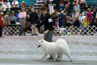 EL-AL's A Touch Of Destiny, a Samoyed bitch, is owned by Catherine Ibold and shown by Nicole King, agent.