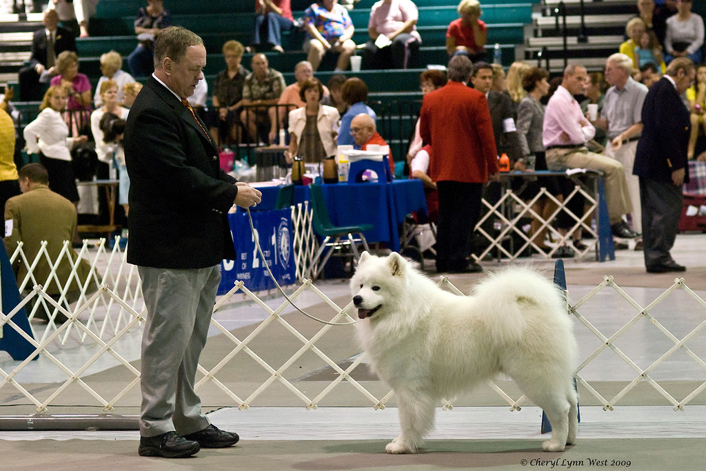 CH Seadog's Smugglers Cove, a Samoyed male, took Best of Breed on January 5th. Robbin is owner/breeder/handled by John Ronald.
