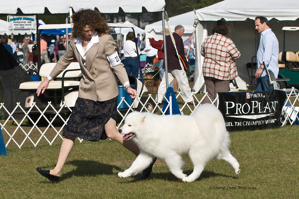 Ch Rexann's Excalibur took Best of Breed.  Arthur is owned by Gail & Larry Bilmar & shown by Chris Jones, Agent.