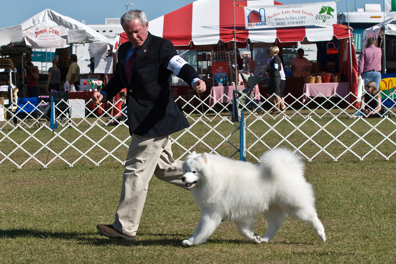 Ch Pebbles' Run Hammy Davis Jr took Best of Breed and Working Group 4.  Hammy is owned by Amy Kiell-Grenn & Andrew Green, who handles him.
