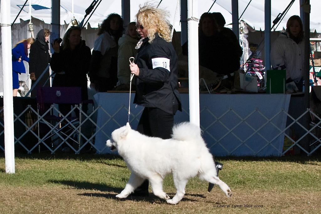 White Gold's Joy Of Emberglow competed in the Open Bitch class.  She is owned by Georgann & LaWayne Wyatt & shown by Sherri Kovach, Agent.