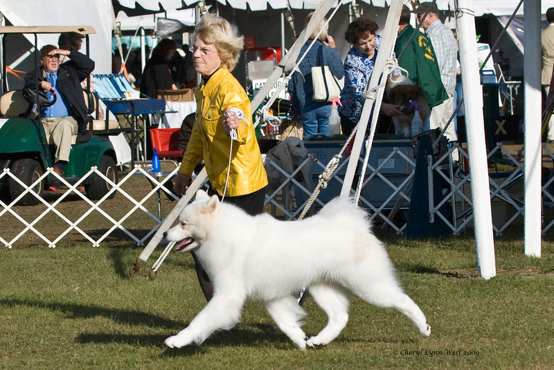 Cold Smoke's Jackson Hole took Reserve Winners Dog.  Jackson is owned, bred & handled by Janice McGlashon.