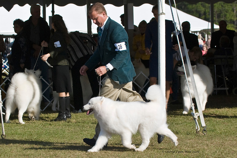 Ch White Gold's Destined To Dazzle took Best of Opposite Sex.  Kiska is owned by her breeder Laura Segers & shown by Charles S Coombs, Agent. January 11, 2009