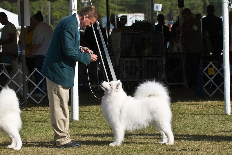 Ch White Gold's Destined To Dazzle took Best of Opposite Sex.  Kiska is owned by her breeder Laura Segers & shown by Charles S Coombs, Agent.