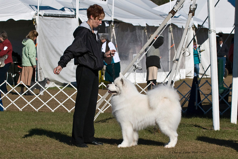 Ch Polar Mist Could It Be Magic, a male Samoyed, competed in Best of Breed at the Samoyed Fanciers of Central Florida specialty.  Kirby is owned by Bruce King & Kathy Cloonan & shown by Nicole King.
