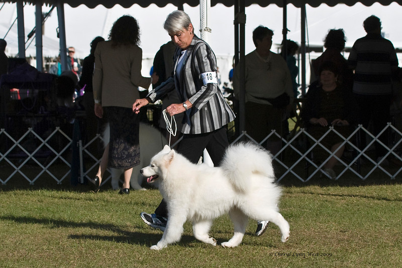 Ch Misty Mountain's A Rose Is A Rose competed in Best of Breed.  She is owned by William & Sandra Broskett & handled by Pat Stout, Agent.