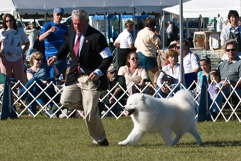 Ch Pebbles' Run Hammy Davis Jr is shown by Andrew Green, taking Working Group 4.  Hammy is owned by Amy Kiell-Grenn & Andrew Green.