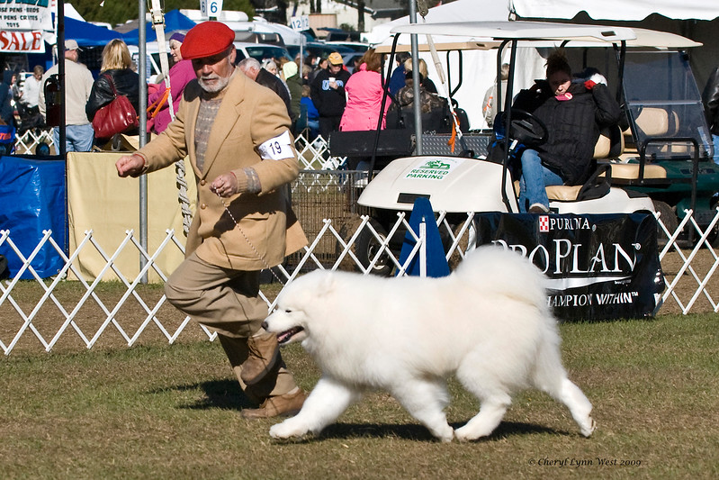 Ch Snopacks Sneak Attack, BIS, got an Award of Merit at the Samoyed Fanciers of Central Florida specialty.  Sniper is owned by Judy & Bill McDougall & Dr. Jacqueline Royce D.O.  He is shown here by Bill McDougall.