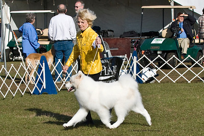Cold Smoke's Jackson Hole took Reserve Winners Dog.  Jackson is owned, bred & handled by Janice McGlashon.
