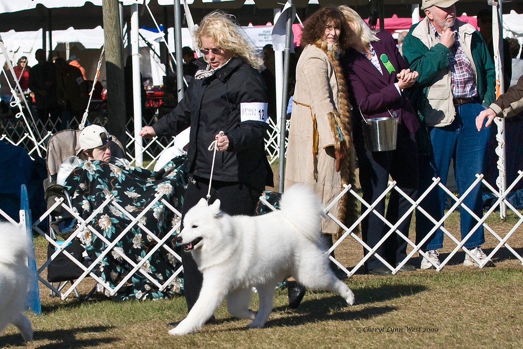 Ch White Gold's Bit O'The Bubbly, a Samoyed bitch, competed in Best of Breed.  Kendra is owned by Fr. Robert Evancho & Laura Segers and shown here by Sherri Kovach, Agent.