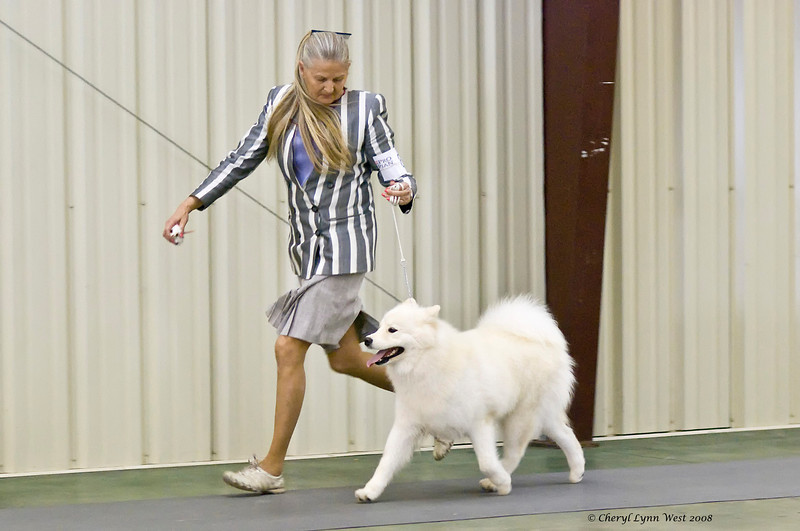 Rhapsody Silverivr Aspen Nites, a Samoyed, competed in the Open Bitch class at the Brevard Kennel Club show.  Ashley is owned by Karyn Kramer & Nancy Kraus.