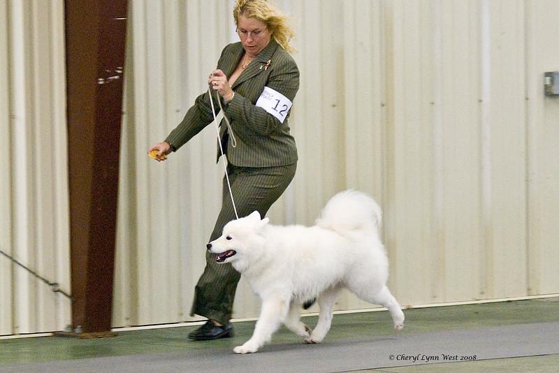 White Gold's Joy Of Emberglow, a Samoyed, won Winners Bitch at the Brevard Kennel Club show.  Joy is owned by Georgann & LaWayne Wyatt.