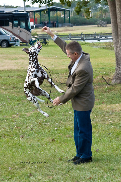 CH Chermar's Princess Perdita, a Dalmatian, and her owner Daniel Brumfield have a little fun while at the dog show.