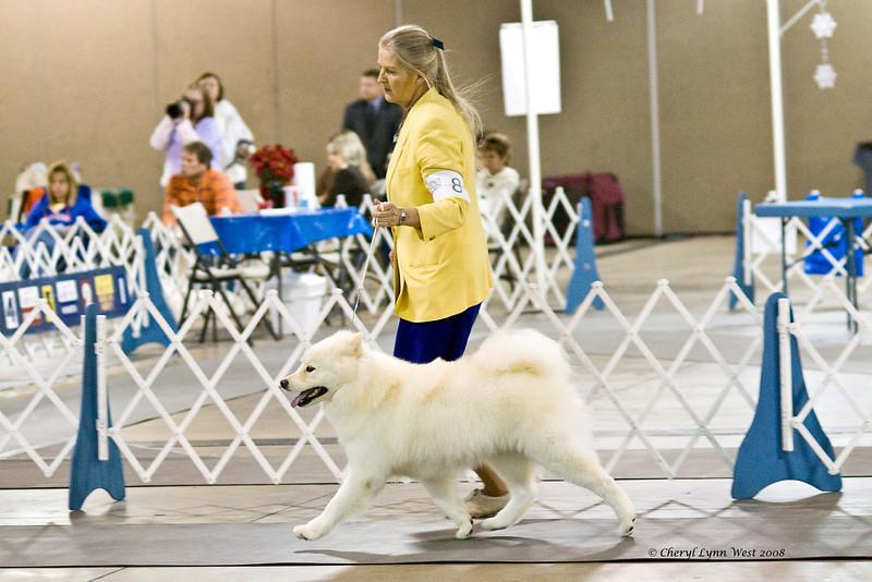 Rhapsody Silverivr Aspen Nites, a Samoyed, took Winners Bitch at the Space Coast Kennel Club show.  Ashley is owned by Karyn Kramer & Nancy Kraus.