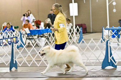 Rhapsody Silverivr Aspen Nites, a Samoyed, took Winners Bitch at the Space Coast Kennel Club show.  Ashley is owned by Karyn Kramer & Nancy Kraus.