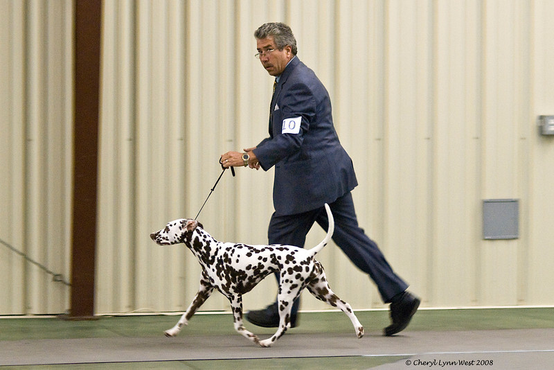 CH Chermar's Princess Perdita, a Dalmatian, went Best of Breed over specials to finish her championship at the Space Coast Kennel Club of Palm Bay show.  Perdita is owned by Daniel Brumfield and Cheryl Worden Coe.  She is handled by Gary Sheetz, agent.