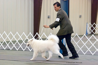 White Gold's Bit O' The Bubbly, a Samoyed, competed in the Open Bitch class.  Kendra took Reserve Winners Bitch, with Brian Tuel, agent, handling her.  She is owned by Fr. Robert Evancho & Laura M Segers.