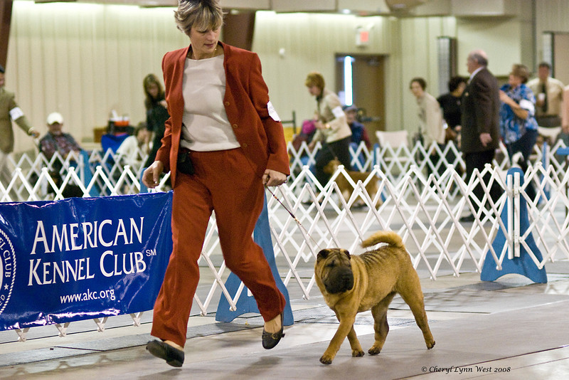 T'ai Bet Bell Lucky Blaze Monet, a Chinese Shar-Pei, competed in the Orlando shows in the Open Bitch class.  Monet is owned by Ann Matto.