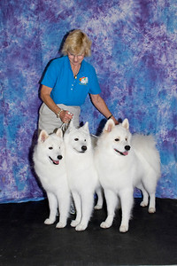 Janice McGlashon poses with three generations of Cold Smoke Samoyeds - Cubby (CH Cold Smoke's Piper Cub - mother), Piper (CH Cold Smoke's Sandpiper Beach HT - grandmother) and Jackson (Cold Smoke's Jackson Hole HIC - son).