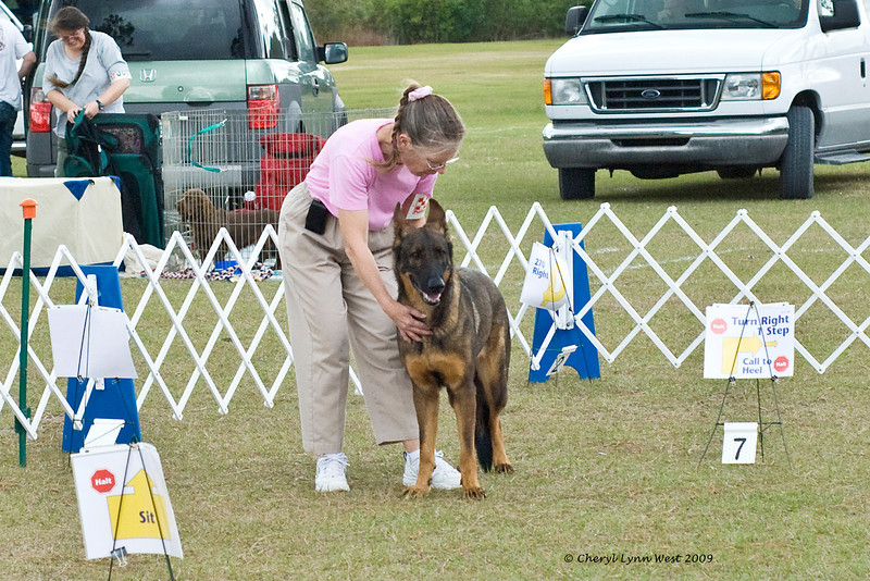 Belgian Malinois, competing in Rally